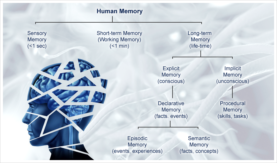 human memory diagram printable human body diagram injury